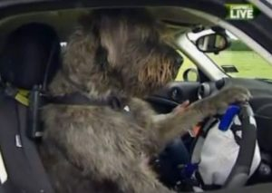 Driving Dogs of New Zealand